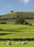 горный склон welsh Стоковое фото RF