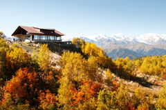 Горный склон леса в осени Стоковые Фотографии RF