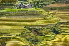 Горный склон заполненный с террасами риса Стоковое фото RF