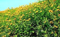 Горный склон золотых цветков Стоковая Фотография