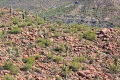 Горный склон пустыни любить с Saguaros Стоковое Фото