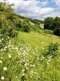 Горный склон Denbies, Суррей, Англия Стоковая Фотография RF