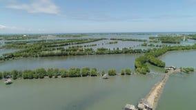 Городок среди воды в мангровах видеоматериал