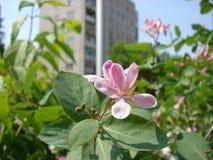 городок flowerses Стоковые Изображения