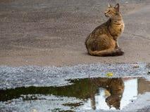 Городская улица кот в ждать голубях Стоковая Фотография RF