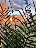 Городской взгляд захода солнца от окна стоковое изображение rf