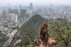 Городской пейзаж Guiyang в полдень, провинция Гуйчжоу, Китай с обезьяной на переднем плане стоковые фотографии rf