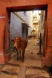 Город Индии старый стоковые изображения