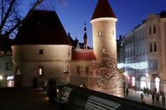 Город освещает старые vitrines покупок Эстонии панорамы Таллина стоковые изображения rf
