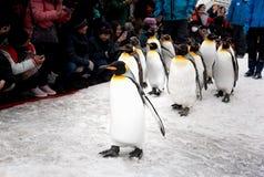 Город Asahikawa, Хоккаидо, Япония 13-ОЕ МАРТА 2019: Парад пингвинов пока идущ через снег на зоопарке Asahiyama, Японии стоковая фотография rf