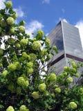 город bush стоковая фотография