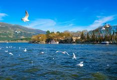 Город Ioannina в Греции Взгляд озера и мечети cami Aslan Pasa с чайками и лебедями Стоковое Изображение