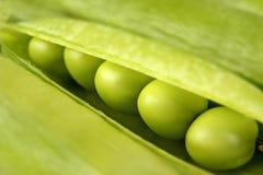 горохи предпосылки зеленые Стоковая Фотография RF