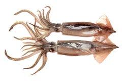 Горох podsFreshly уловил кальмара это shinny стоковая фотография rf