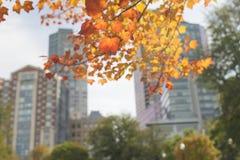 Город Бостона публика сада стоковые изображения rf
