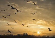 Город в заходе солнца Стоковая Фотография RF