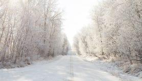 город около железнодорожной дороги светит солнцу снежка к древесине зимы Стоковые Фото