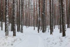 город около железнодорожной дороги светит солнцу снежка к древесине зимы Стоковая Фотография