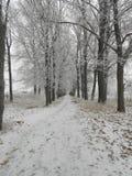 город около железнодорожной дороги светит солнцу снежка к древесине зимы Стоковые Изображения RF