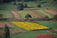 городок Тоскана солнцецветов san gimignano поля chianti backgroun красивейший Стоковые Изображения RF
