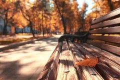 город осени расквартировывает желтый цвет валов листьев Стоковое Изображение