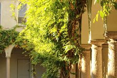 город осени расквартировывает желтый цвет валов листьев Стоковое Фото