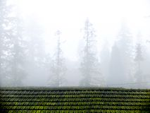 Город долины Sapa в тумане в утре Стоковое фото RF