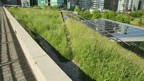 Городская зеленая трава крыши, съемка тележки акции видеоматериалы