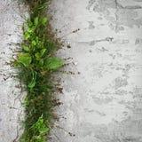 Городская природа Стоковые Фотографии RF
