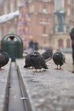 Городские голуби Стоковые Фотографии RF