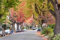 Городские эвкалипты помадки леса Стоковая Фотография RF