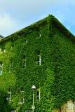 Городской дом с зелеными стенами Стоковые Изображения