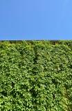Городской дом с зелеными стенами Стоковая Фотография RF