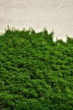 Городской дом с зелеными стенами Стоковые Изображения RF