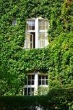 Городской дом с зелеными стенами Стоковое Изображение RF