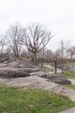Городской парк в предыдущей весне, середине от деревьев -го марша, чуть-чуть New York Стоковое Фото