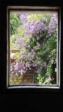 Городской сад от окна стоковые изображения