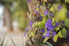 город цветет улица pultusk Польши Стоковые Фото
