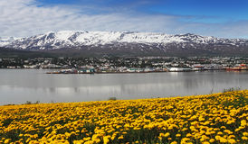 Город Akureyri - Исландия Стоковые Изображения RF
