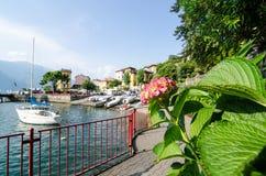 Гортензия на порте Varenna, шлюпок и цветков Стоковое Изображение