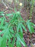 Горшечное растение Стоковое Изображение RF