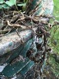 Горшечные растения стоковая фотография
