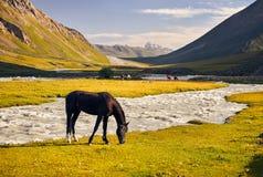 Горы еру 'лошадей ÑˆÑ Кыргызстана стоковое изображение rf