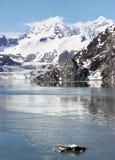 горы Аляски Стоковые Фотографии RF