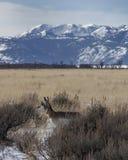 горы антилопы Стоковые Изображения RF