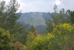 Горы ландшафта в Турции Стоковые Изображения