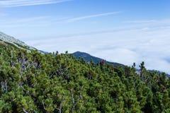 Горы благоустраивают сцену затишья природы пейзажа высоких пиков одичалую Пеший туризм перемещения образа жизни активный Сценарны стоковое изображение
