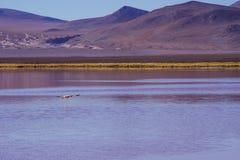 Горы Боливии, altiplano стоковое изображение
