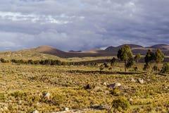 Горы Боливии, altiplano Стоковые Изображения RF