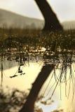 горы бухточки cades закоптелые Стоковая Фотография RF